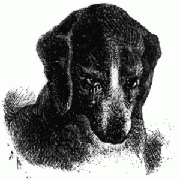 Приют для животных «ЭКО-Бирюлево»