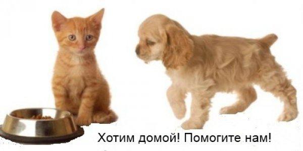 Приют для животных «ЭКО, Печатники»