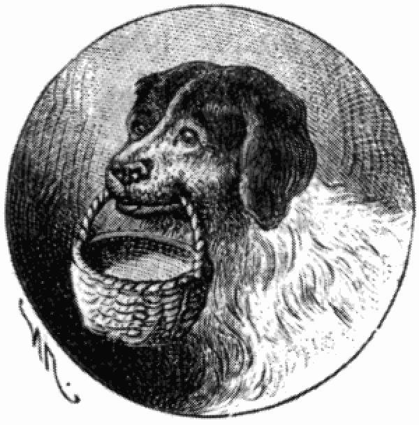 Приют для животных «Дyбовaя Pощa», платформа Останкино