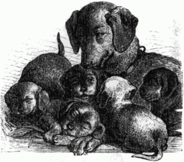 Приют для животных «Зов Предков», Одинцово