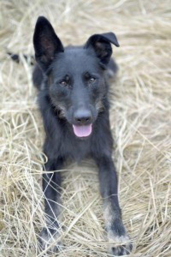 Приют для животных «Супер собака»