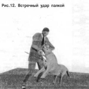 Защита от нападения собаки