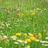 Как получить лечебные травы
