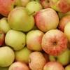 Овощи, фрукты, и ягоды, используемые при различных заболеваниях