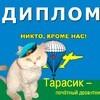 Ведущий станицы - кот Тарасик