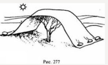Как отвоевать себе место в тени, или Выживание в условиях жаркого климата