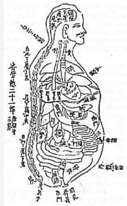 Библиотека портала. Валерий Момот. Анатомия жизни и смерти. Жизненно важные точки на теле человека. Часть 1